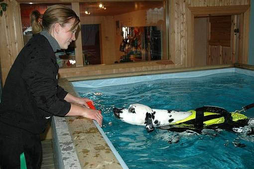 Dalmo's Hedmaster II på svømmetrening