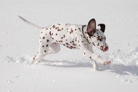 Goya i snøen